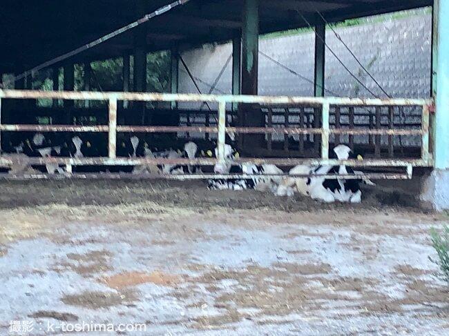 八木山畜産センターの牛