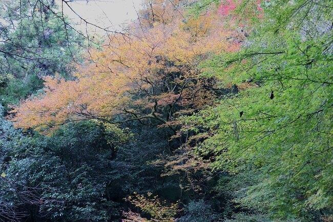 宝満山の紅葉